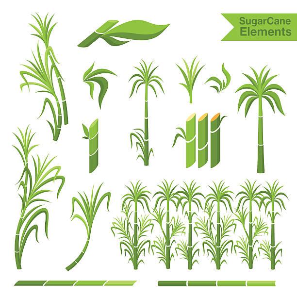 illustrazioni stock, clip art, cartoni animati e icone di tendenza di elementi di decorazione di canna da zucchero - canna da zucchero