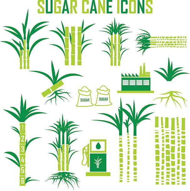 illustrazioni stock, clip art, cartoni animati e icone di tendenza di illustrazione vettoriale delle icone di canna da zucchero. - canna da zucchero