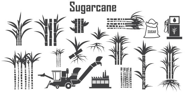 illustrazioni stock, clip art, cartoni animati e icone di tendenza di sugar cane icons vector. - canna da zucchero