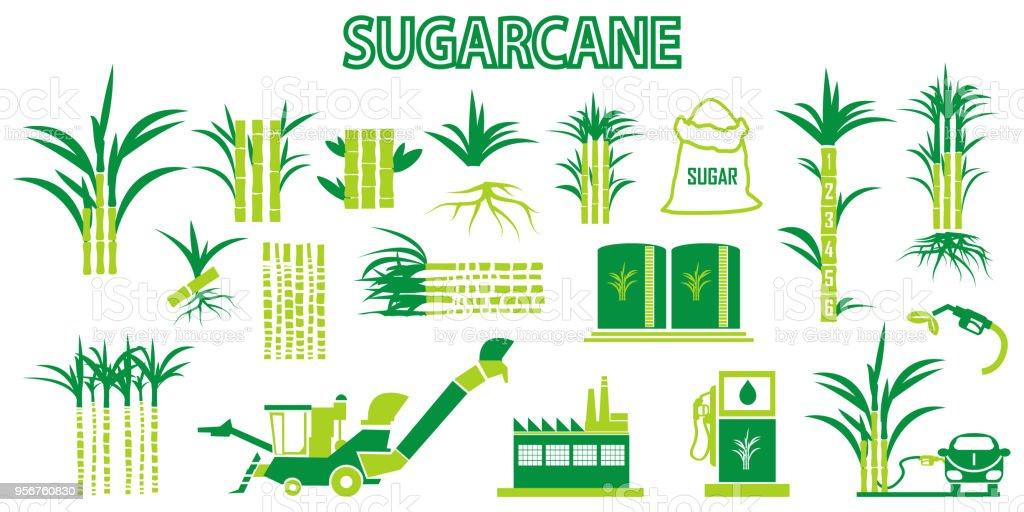 Ilustración De Vector De Iconos De La Caña De Azúcar Y