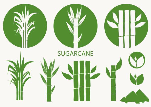 illustrazioni stock, clip art, cartoni animati e icone di tendenza di sugar cane set. cane plant, sugarcane harvest stalk, plant and leaves, sugar ingredient stem. vector - canna da zucchero