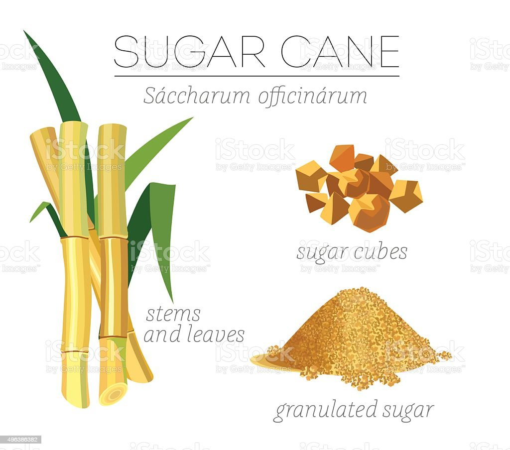 Sugar cane vector art illustration