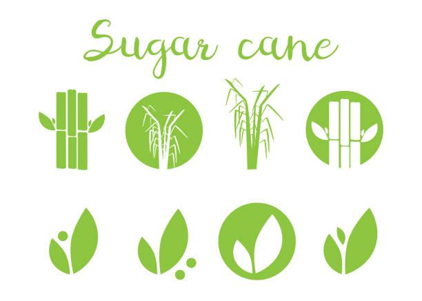 illustrazioni stock, clip art, cartoni animati e icone di tendenza di sugar cane vector illustration. sugar and sugar cane labels - canna da zucchero