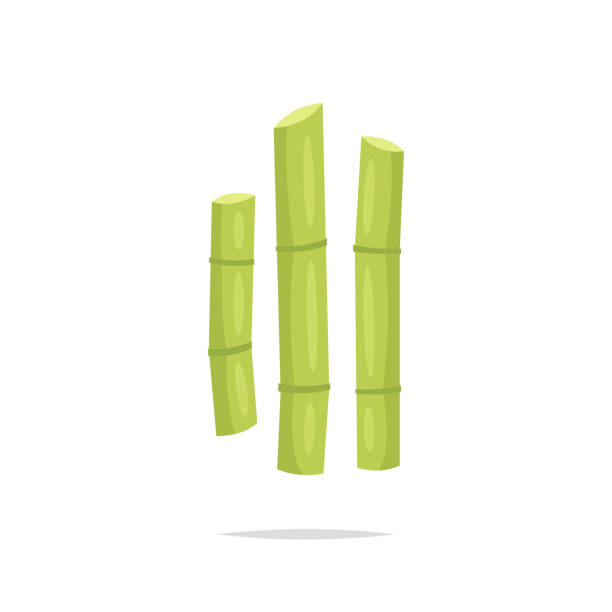 illustrazioni stock, clip art, cartoni animati e icone di tendenza di sugar cane vector illustration - canna da zucchero