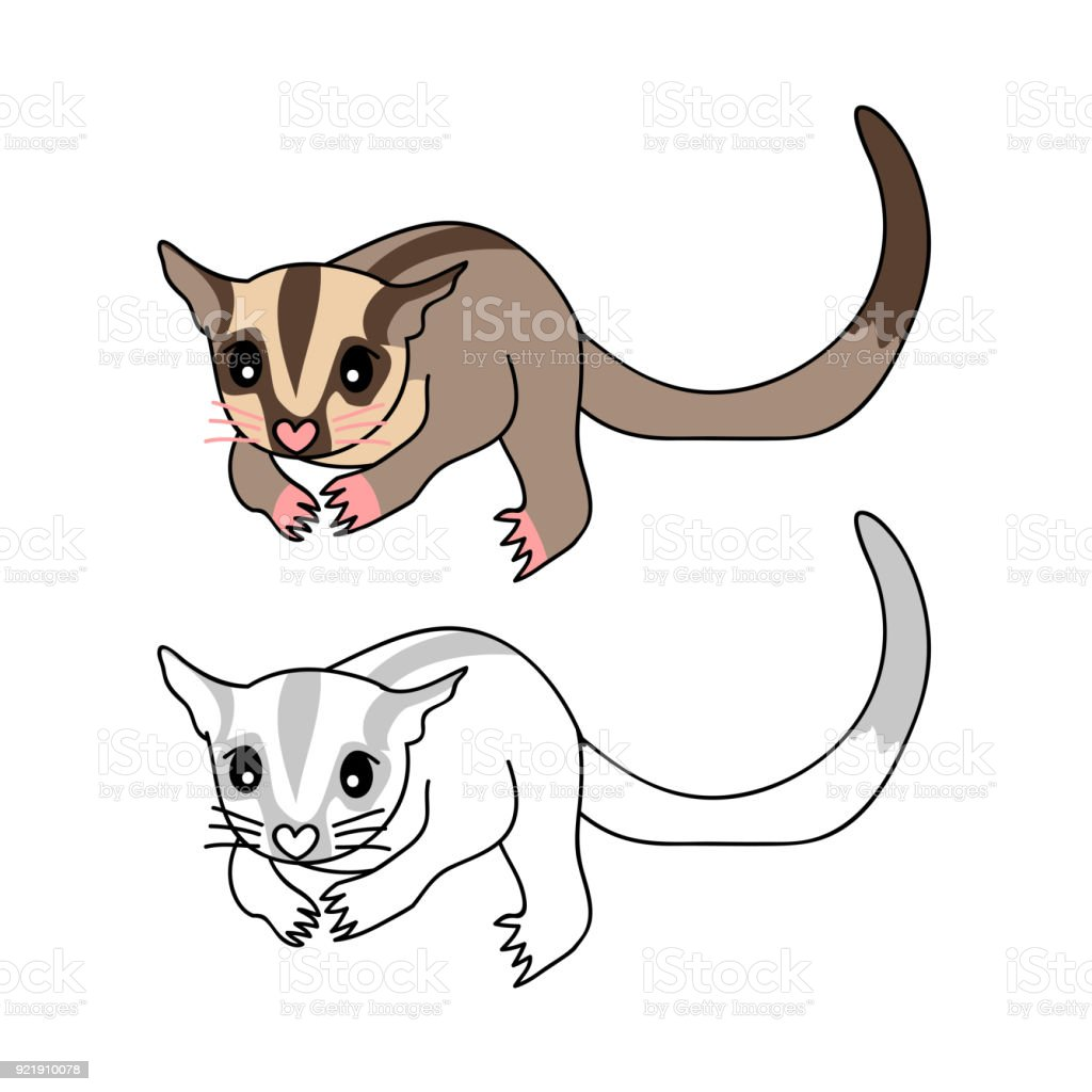 Sugar Glider Stock Vector Art & More Images of Animal 921910078 | iStock