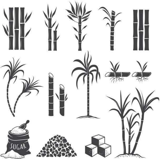 ilustrações de stock, clip art, desenhos animados e ícones de sugarcane farm symbols. sweets field plant harvest milling vector colored illustrations isolated on white background - açúcar