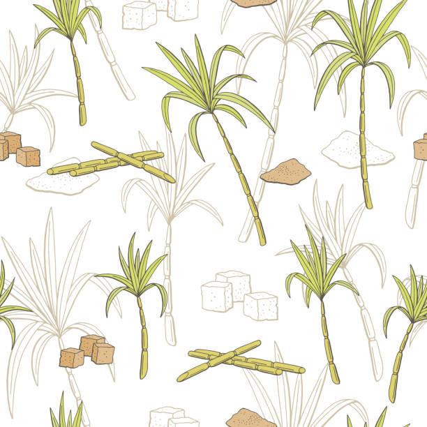 illustrazioni stock, clip art, cartoni animati e icone di tendenza di sugarcane graphic color seamless pattern sketch illustration vector - illustrazioni di canna da zucchero