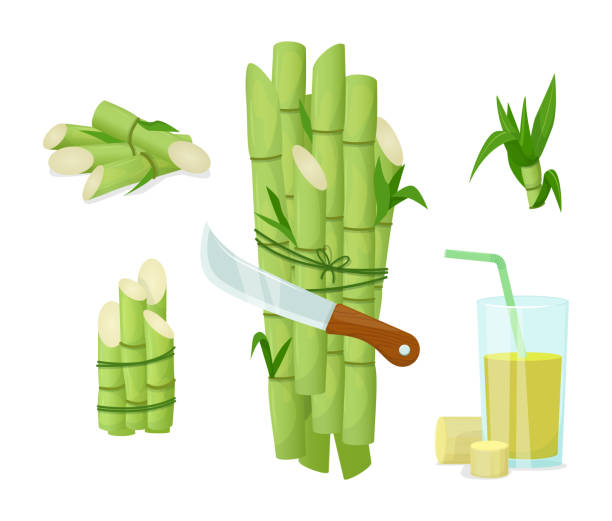 Sugarcane herb and juice. Natural organic product food Sugarcane herb and juice. Fresh squeezed sugar cane in glass with stalks and sugar cubes. Natural organic product food and drink farm vector cartoon illustration carbohydrate biological molecule stock illustrations