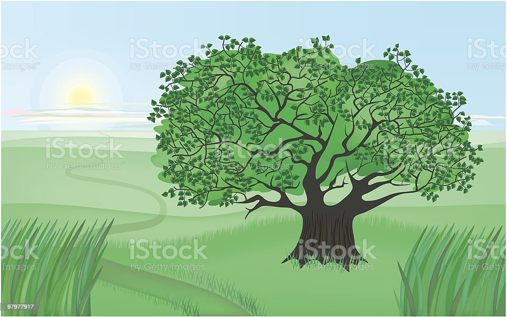 summer apple tree royalty-free summer apple tree stock vector art & more images of beauty in nature