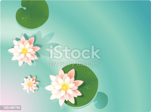 summer background - lilies in the pond