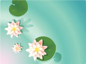 White water lily on a pond, watercolor illustration.