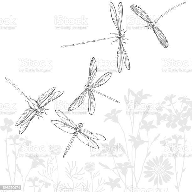 Summer background with silhouettes of meadow flowers and contour by vector id696590674?b=1&k=6&m=696590674&s=612x612&h=rklrewxdplfkc1ycv50w0e cp yvx97xxitmto50vxe=