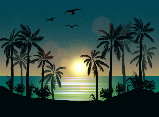Moonlight Illustrations, Royalty-Free Vector Graphics ...