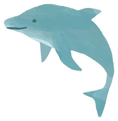 summer dolphin illustration