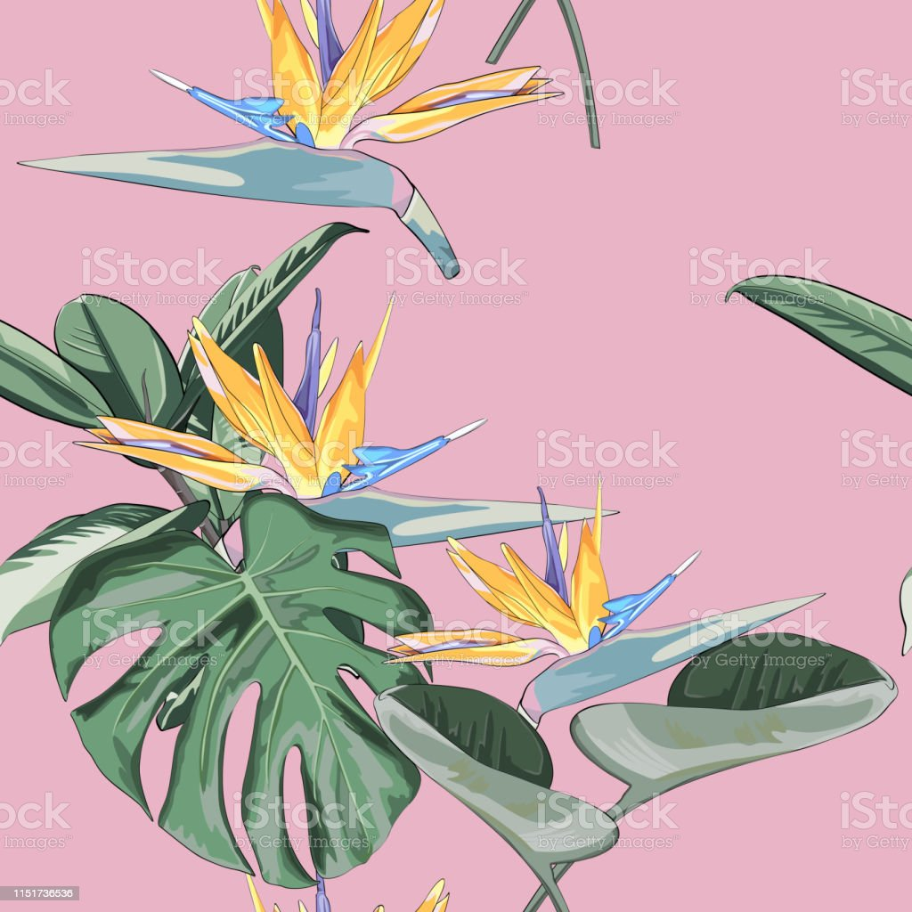 Summer Exotic Floral Tropical Wallpaper Strelitzia Flowers And