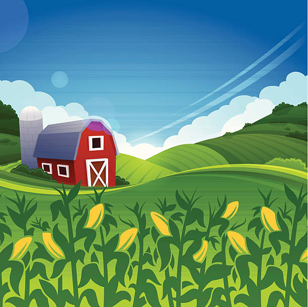 Summer Farm Red barn farm summer background. Very detailed background with copy space. corn crop stock illustrations