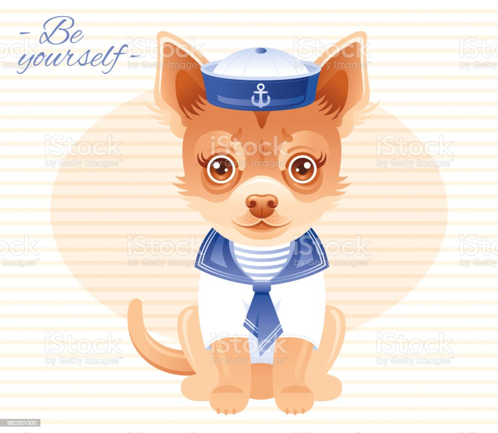 summer fashion chihuahua puppy dog in sweet sailor clothes hat
