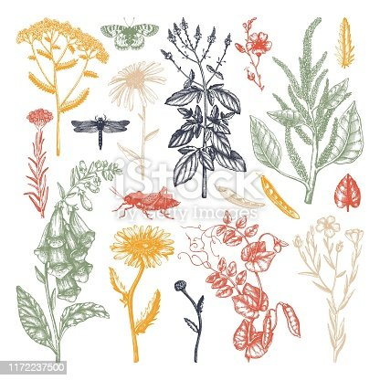 Summer field florals collection. Vector set of hand drawn herbs and meadows. Vintage flowers with insects illustration. Botanical elements in engraved style.