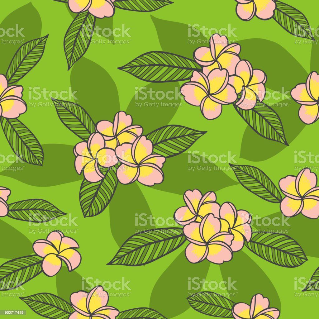 Summer Floral Pattern Vector Seamless Pink Frangipani Flowers On