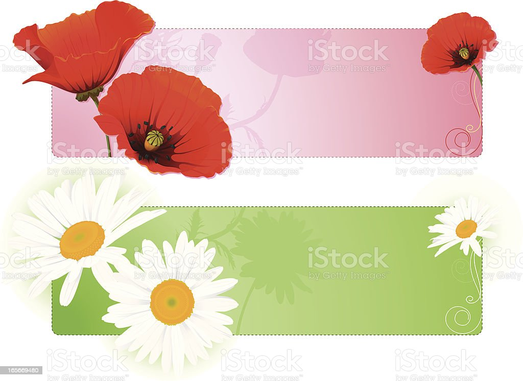 Summer flower banners with poppy and chamomile vector art illustration