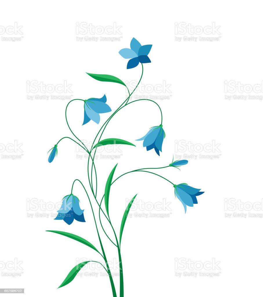 Summer flower campanula ベクターアートイラスト