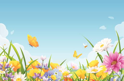 Summer Flowers On A Meadow