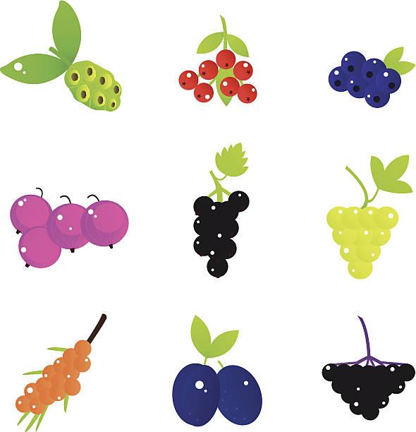 sommer früchte und beeren, die isoliert auf weiss - holunderstrauch stock-grafiken, -clipart, -cartoons und -symbole