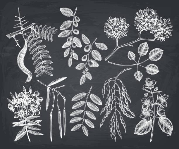 sommergartenbäume auf kreidebrett - robinie stock-grafiken, -clipart, -cartoons und -symbole