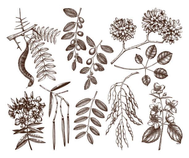 sommergartenbäume setzen - robinie stock-grafiken, -clipart, -cartoons und -symbole
