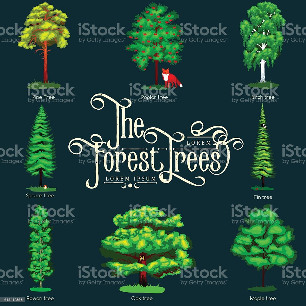 Summer Green Forest Tree isolated on dark background. Cartoon vector vector art illustration