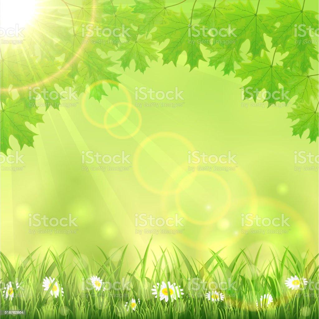 Estate Sfondo Verde Natura Immagini Vettoriali Stock E Altre