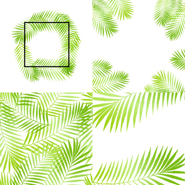 summer green tropical palm tree leaves seamless pattern, frames set. vector grunge design for cards, wallpapers, backgrounds and natural, organic product. - jungle stock illustrations