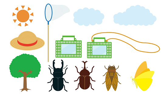 Summer Insect Illustration