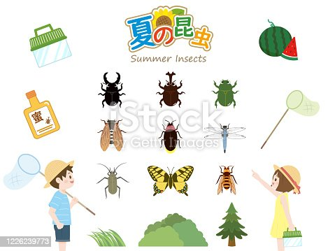 It is an illustration of a Summer insects.