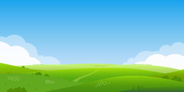 bildbanksillustrationer, clip art samt tecknat material och ikoner med sommar landskap bakgrund. fältet eller äng med grönt gräs, blommor och kullar. horisontlinjen med blå himmel och moln. gård och landsbygd landskap. vektorillustration. - fält