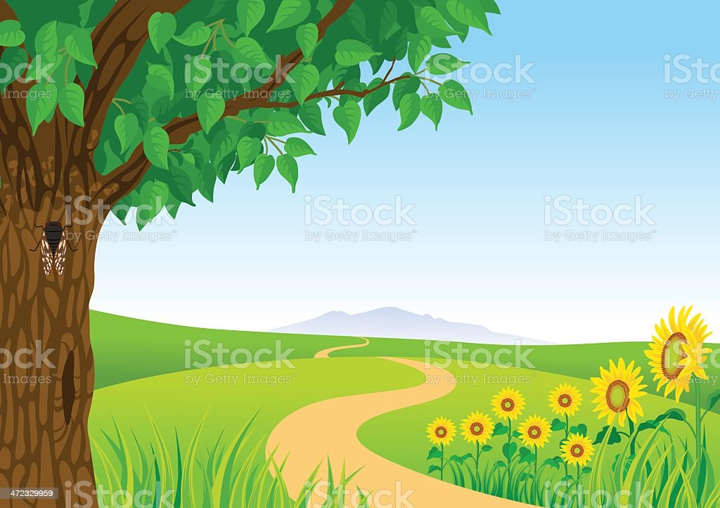 Summer Landscape, Sunflower and Cicada vector art illustration