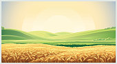 Summer landscape with field wheat