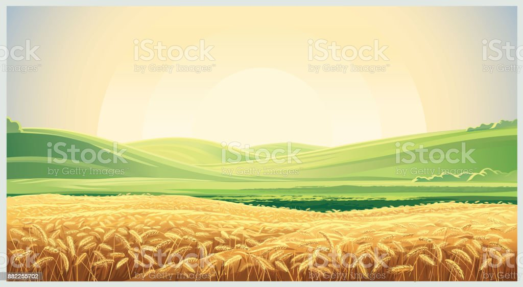 Summer landscape with field wheat vector art illustration