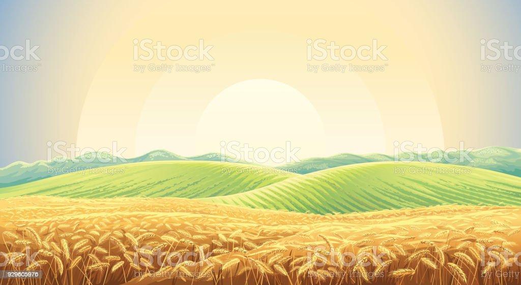Summer landscape with field wheat summer landscape with field wheat - immagini vettoriali stock e altre immagini di abbondanza royalty-free