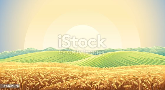 istock Summer landscape with field wheat 929605976