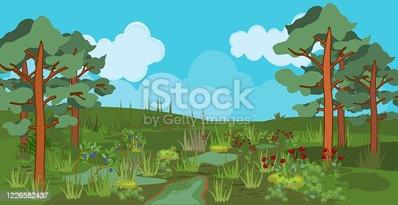 Summer landscape with swamp