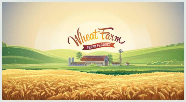 stockillustraties, clipart, cartoons en iconen met zomer landschap met tarweveld - wheat field
