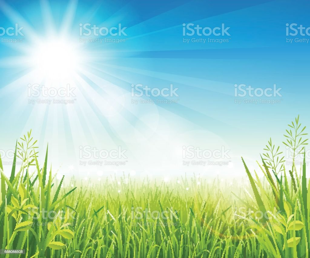 Summer lawn with grass vector art illustration
