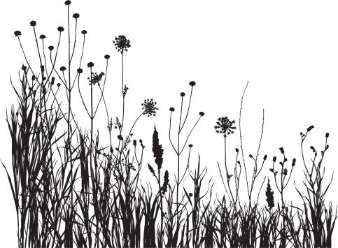 summer meadow 1