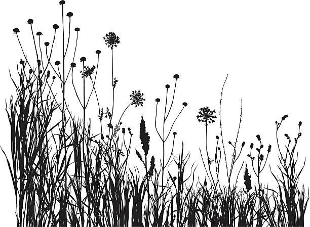 ilustrações, clipart, desenhos animados e ícones de prado de verão 1 - papoula planta