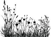 Summer or spring meadow.