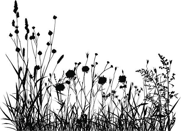 illustrations, cliparts, dessins animés et icônes de silhouette de prairie d'été - plante sauvage
