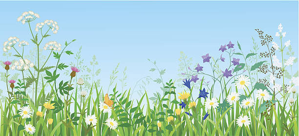 summer meadow - wildflowers stock illustrations, clip art, cartoons, & icons