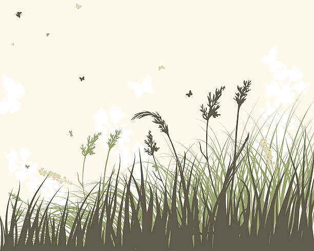 stockillustraties, clipart, cartoons en iconen met summer meadow - grasspriet