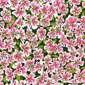 Summer nature botanical illustration. Seamless pattern made of decorative daisy flowers. Ditsy meadow ornament. Simple floral background in vintage style. Good for fashion, fabric and textile.